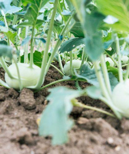 Haar als voedingsstof voor groenten? Recycling in de kappersbranche