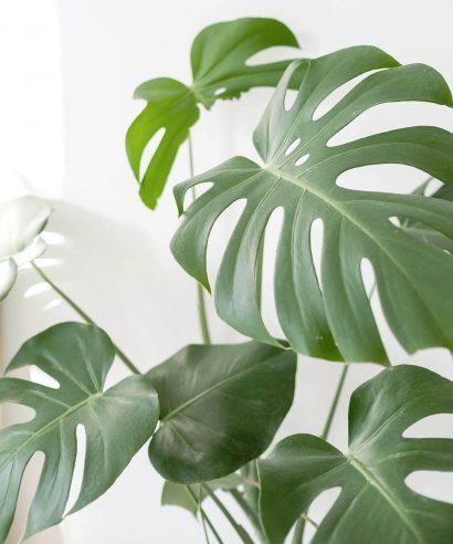 Jouw salon groen kleuren? Waarom dat juist nu een goed idee is!